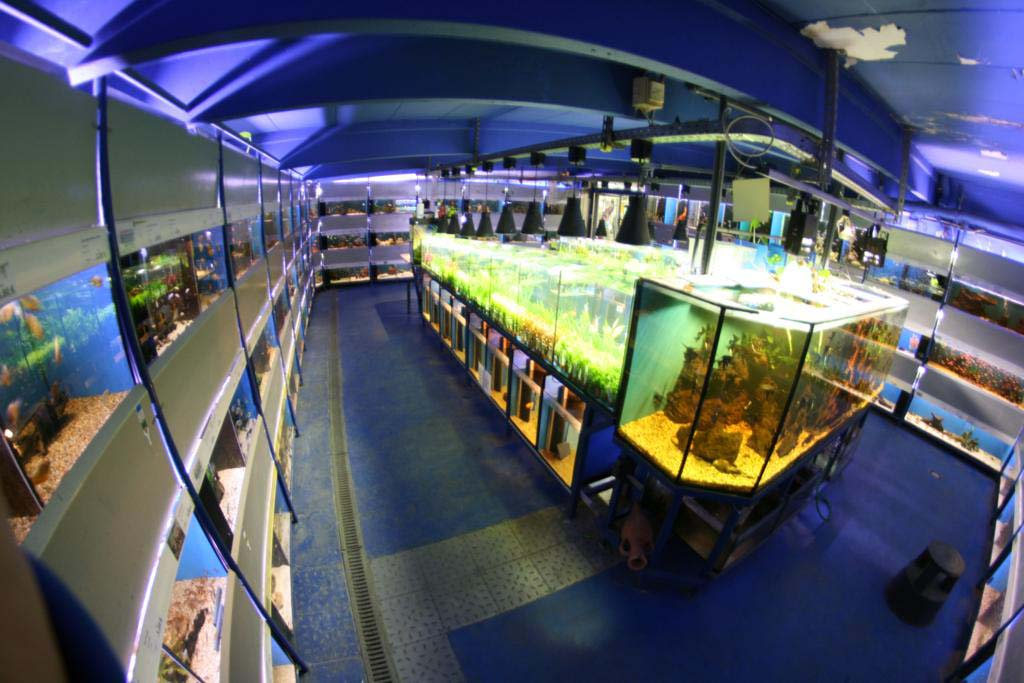 Aquariumraum