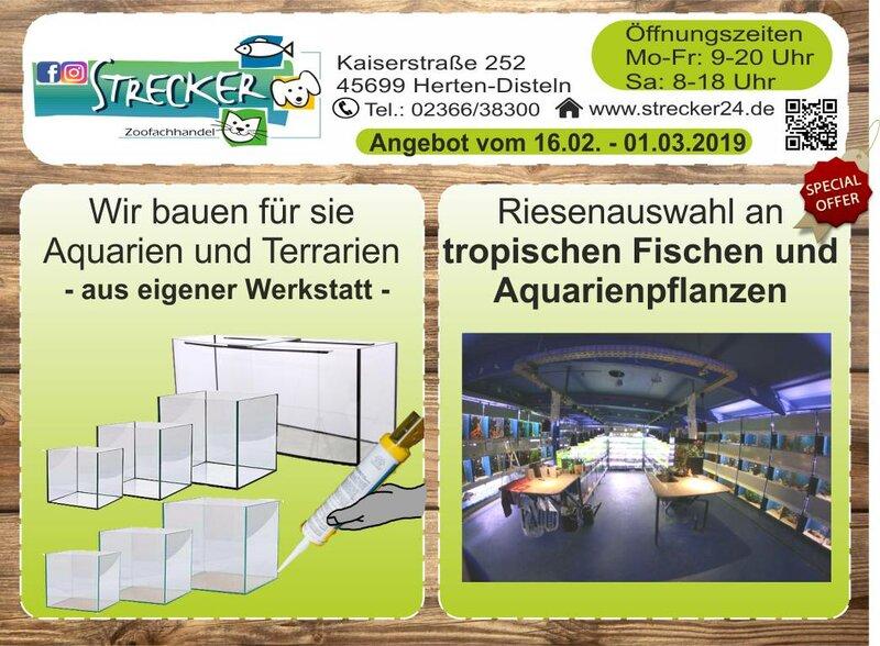 Aquarien und Terrarien. Tropische Fische und Aquarienpflanzen.
