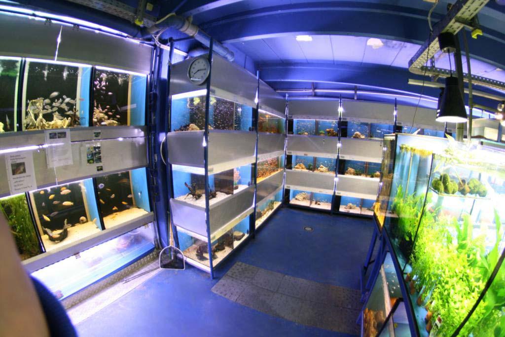 Aquariumraum links