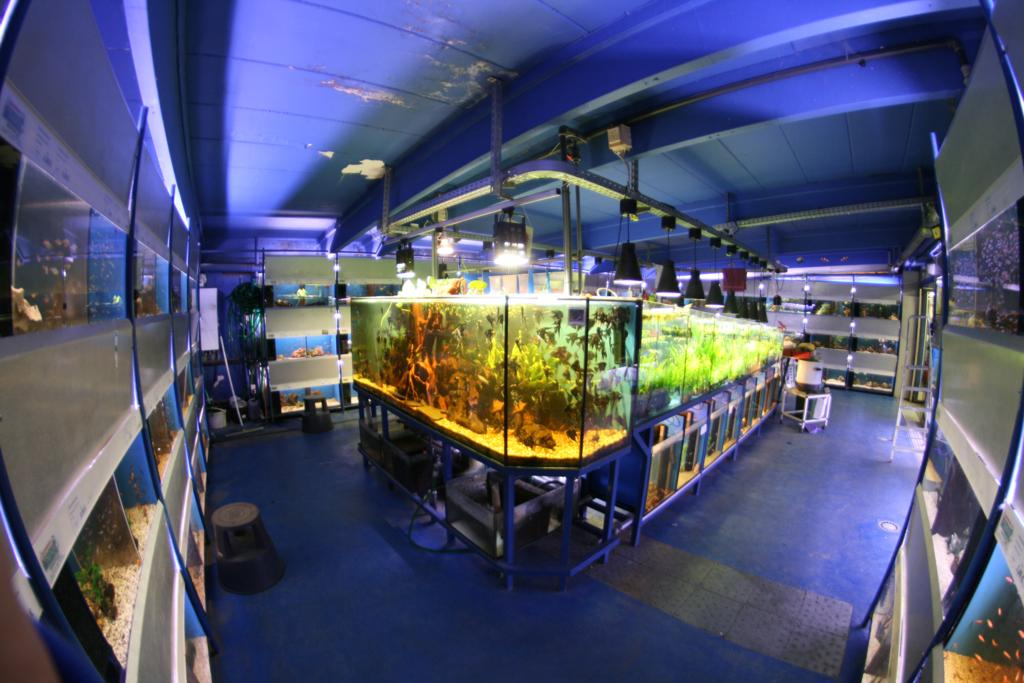 Aquariumraum